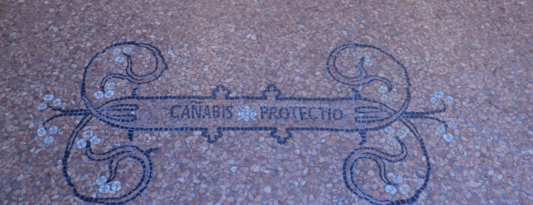 Canabis protectio